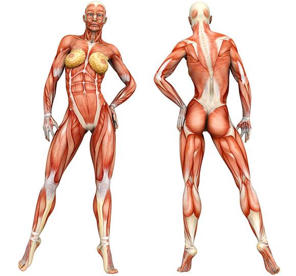 exercise-information-women